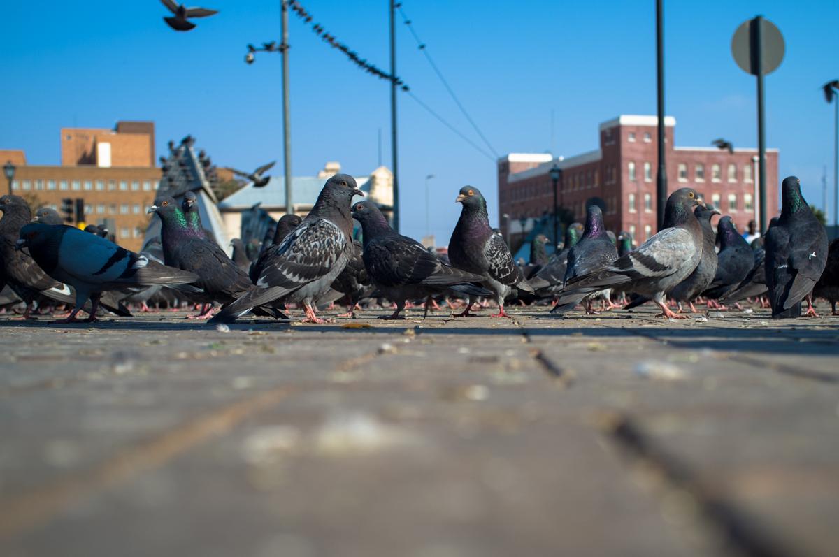 Pigeon Square - Ferreirasdorp
