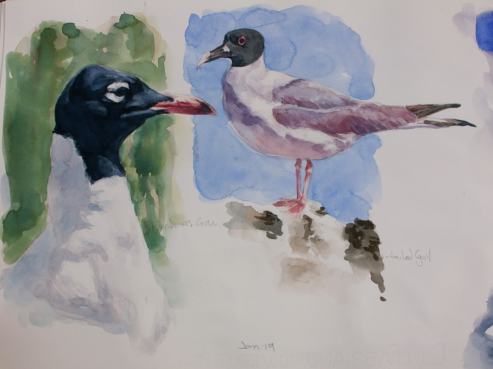 27 watercolor birds.JPG