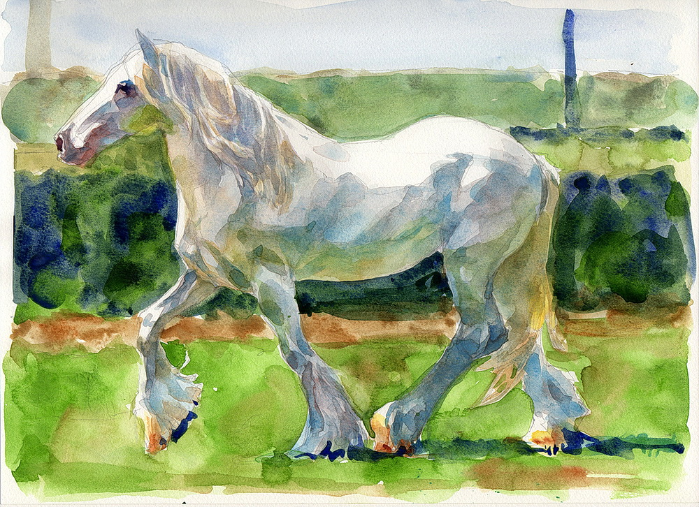 white horse watercolor  (7).jpg