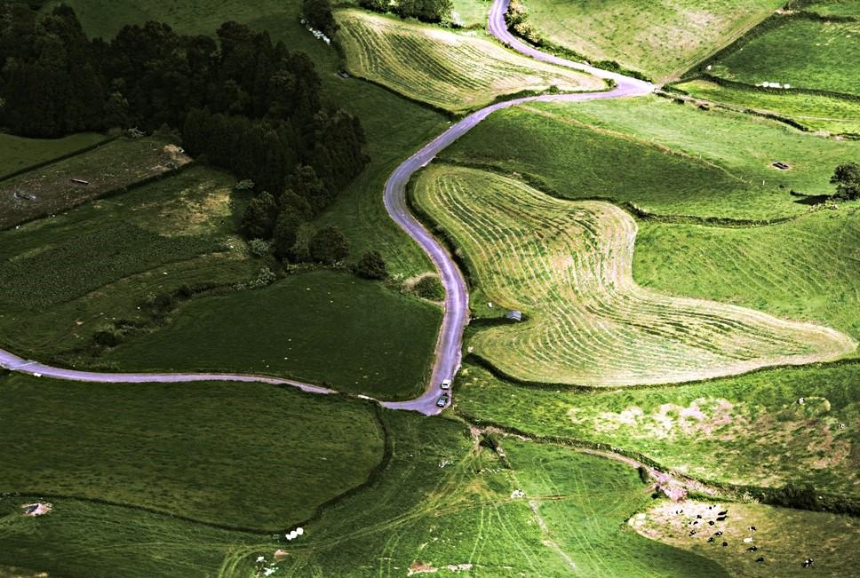 Greenery on Ponta Delgada, Azores in Portugal. Spring, 2017