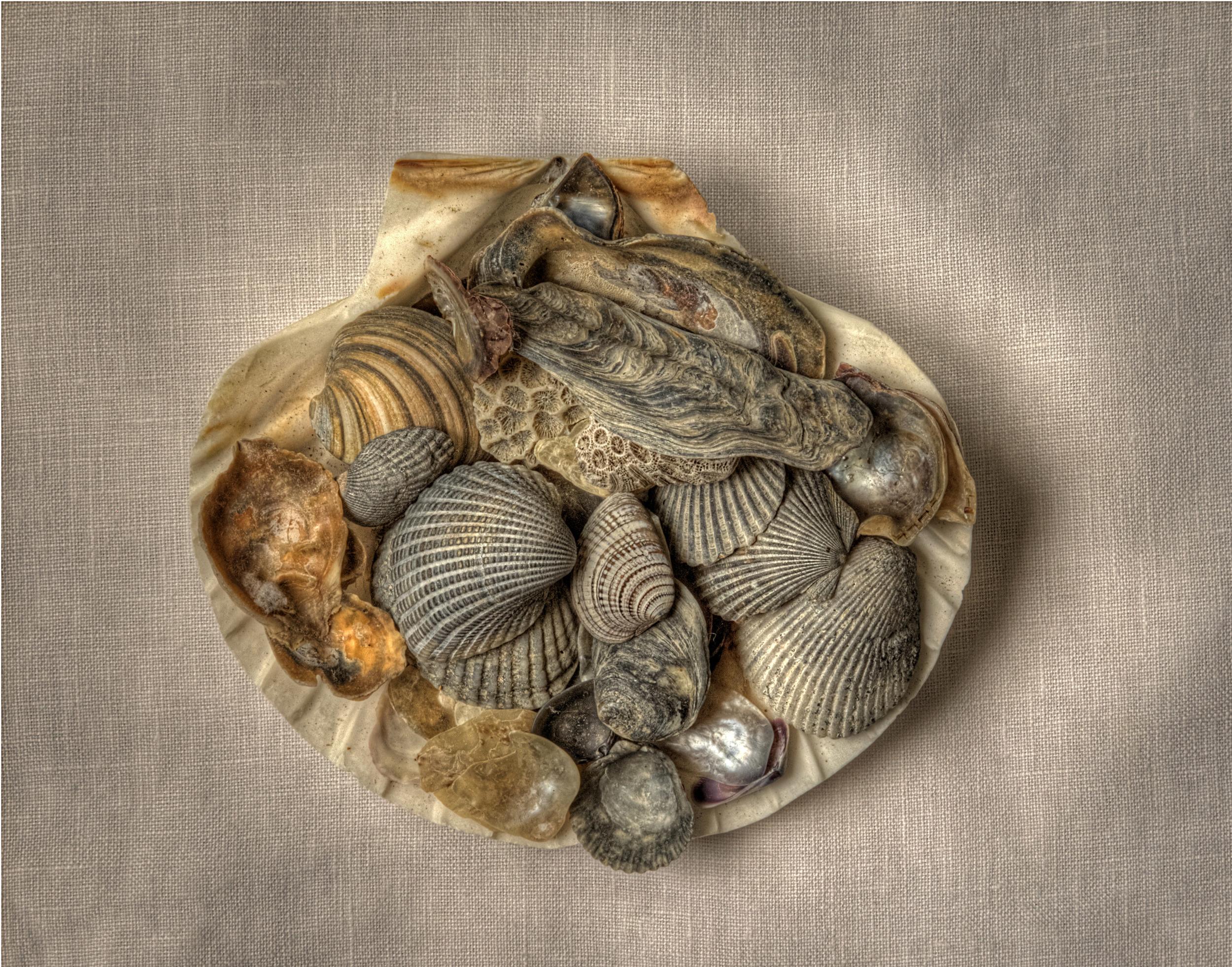 Amy's Shells