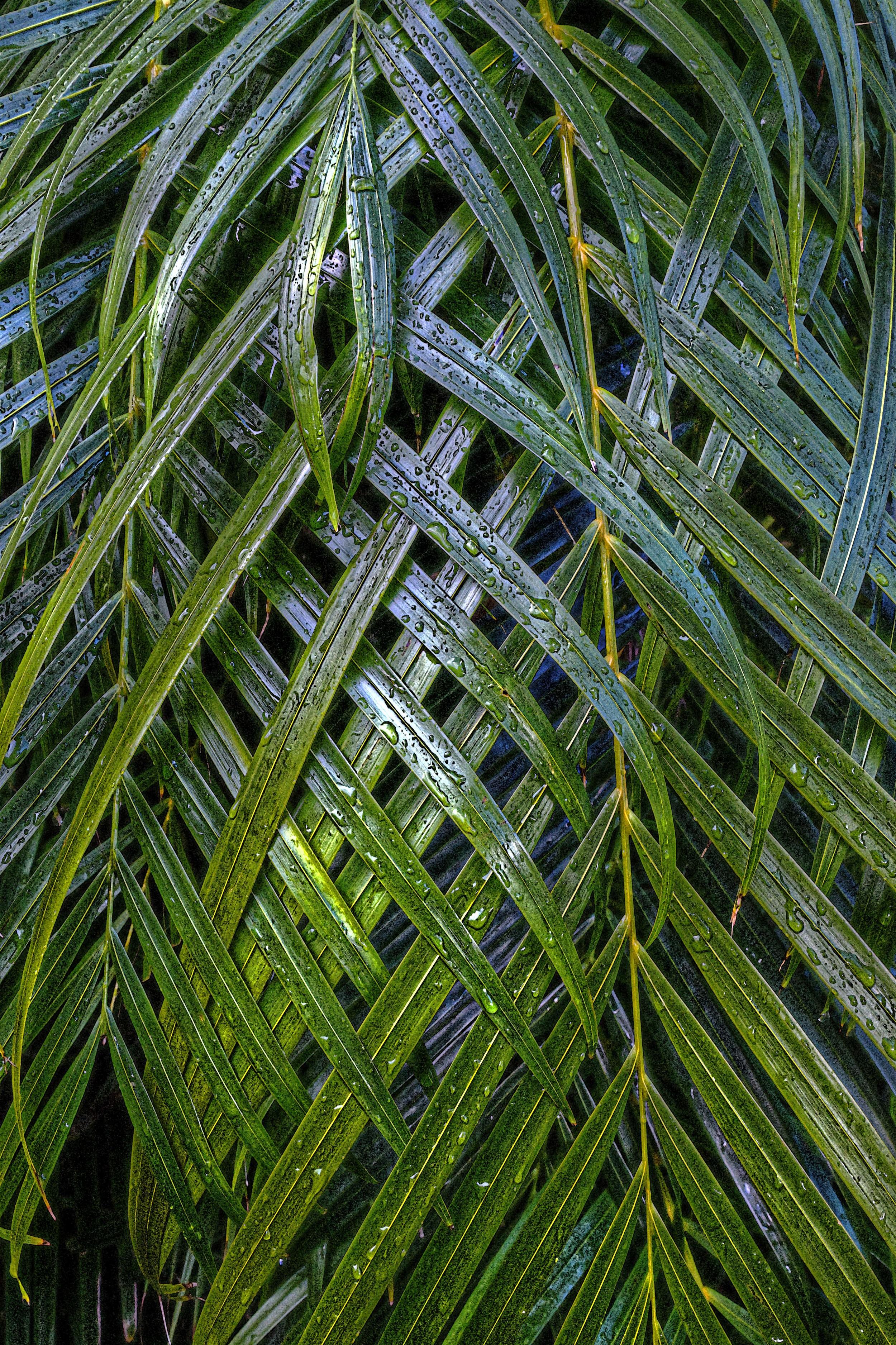 Areca Weave