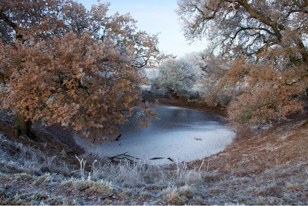 Image © Helen Sear, Pond, 2011