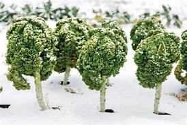Kale_Snow.jpeg