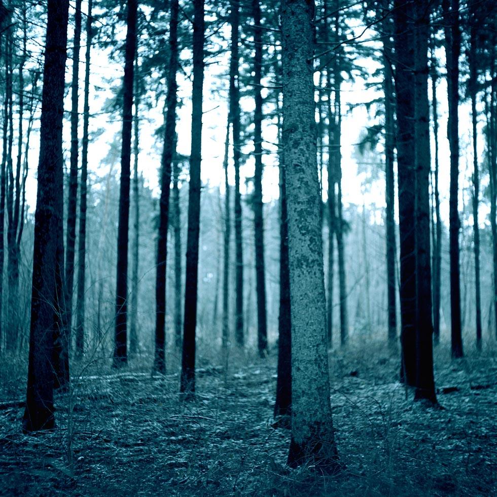 016579-x-1-treesv3.jpg