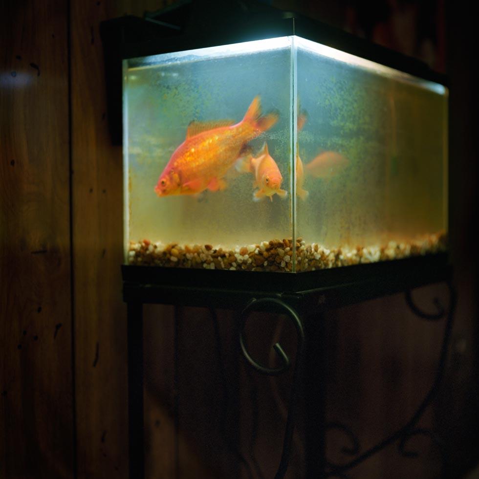 016579-x-08-fish_fv2.jpg