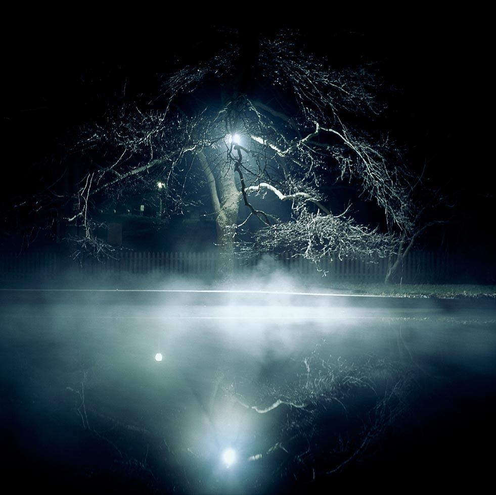 fog-tree-3.jpg