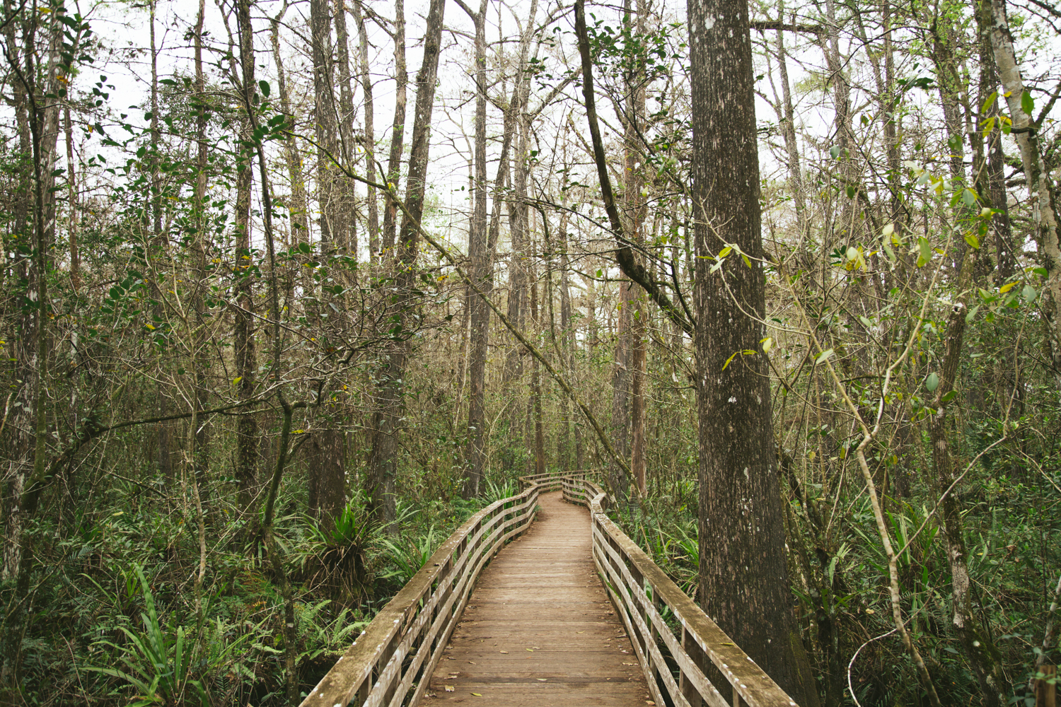 150101_Corkscrew_Swamp_0093_blog.jpg
