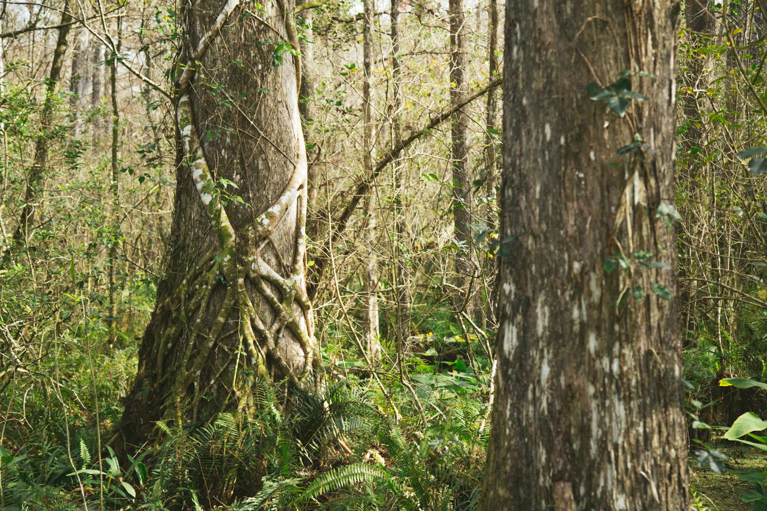 150101_Corkscrew_Swamp_0160_blog.jpg