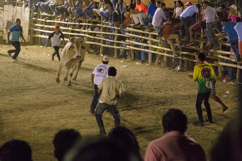 150322_Bull_Riding_Color_WebAAAA0063.jpg