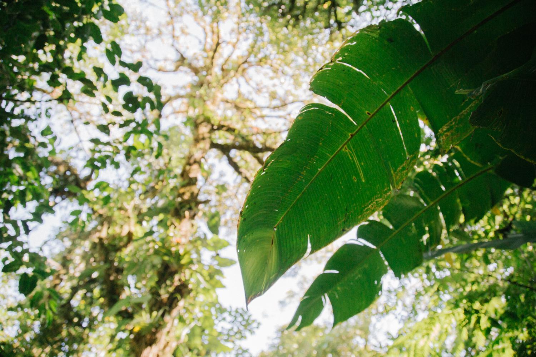 150324_Monte_Verde_Colored_Web_AAAA0157.jpg