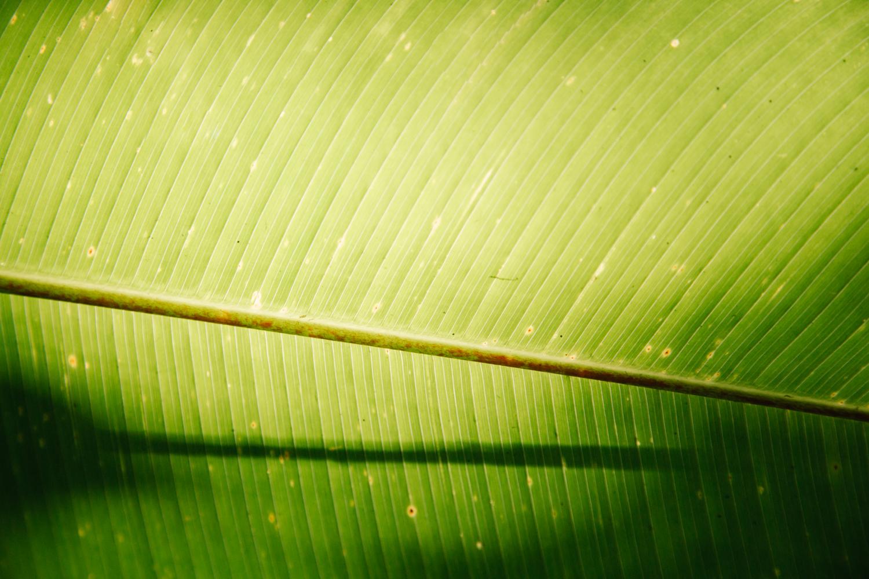 150324_Monte_Verde_Colored_Web_AAAA0202.jpg