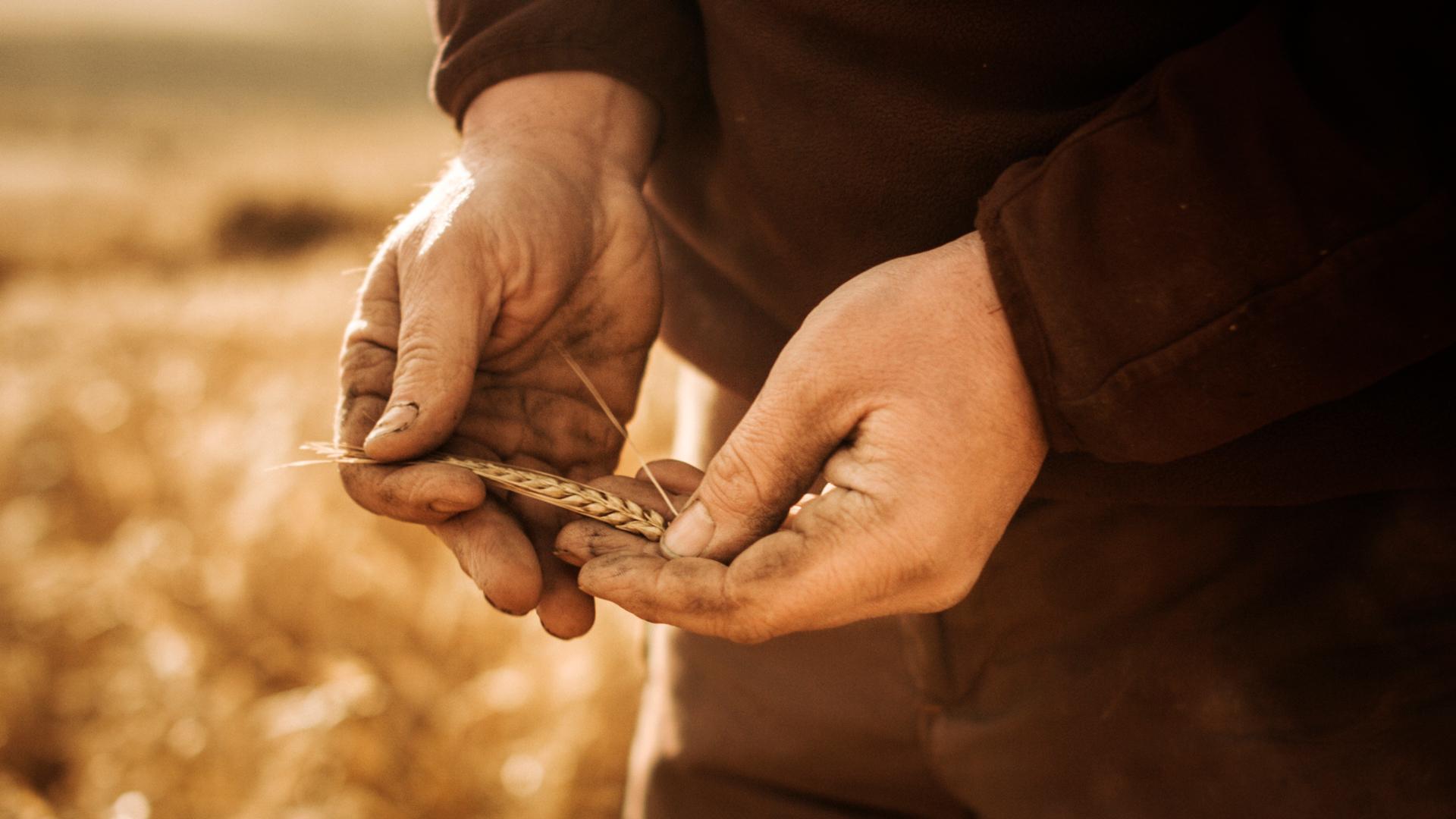 Hand_Barley.jpg