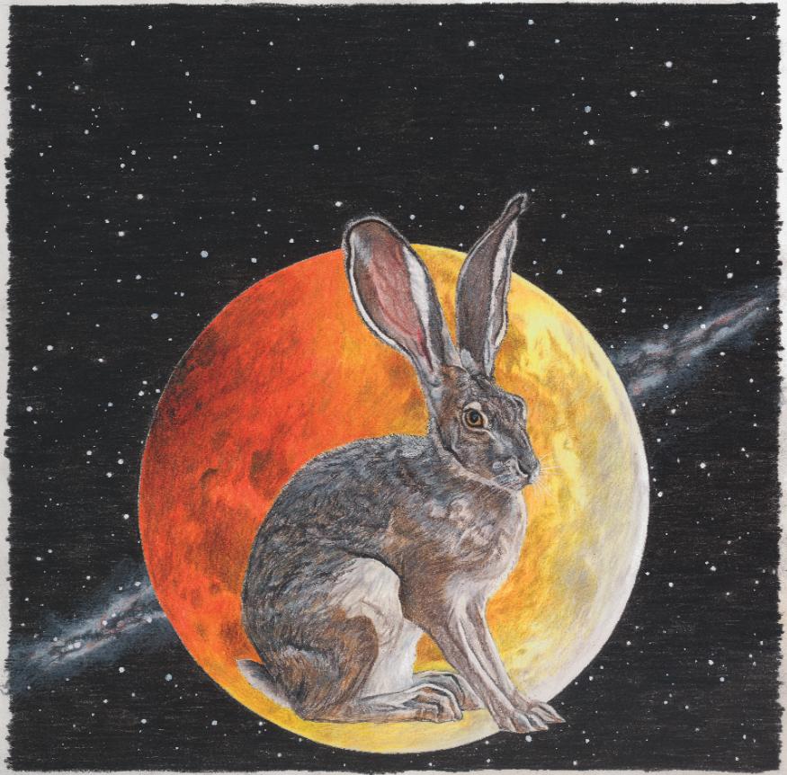 Enjoy Your Rabbit