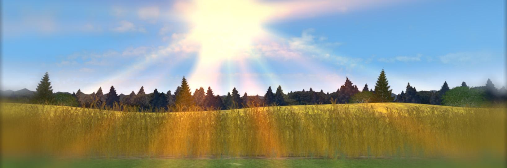 FIERA_wheat1.jpg