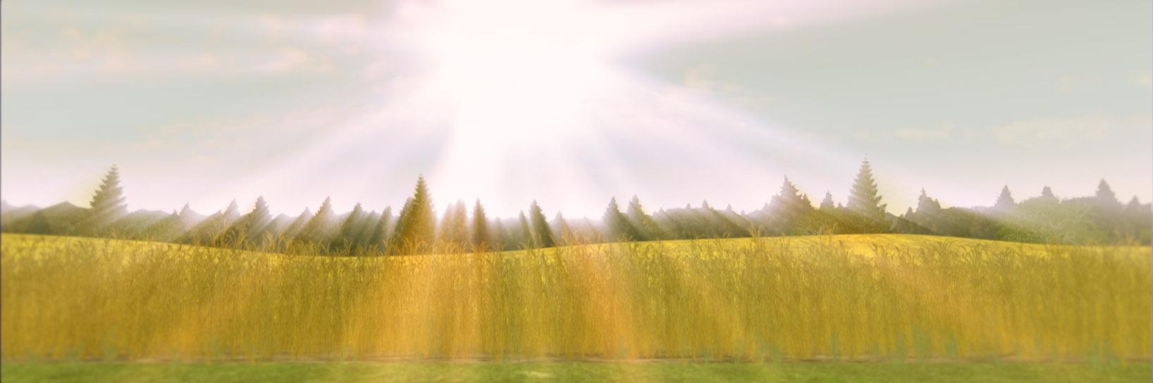 FIERA_wheat3.jpg