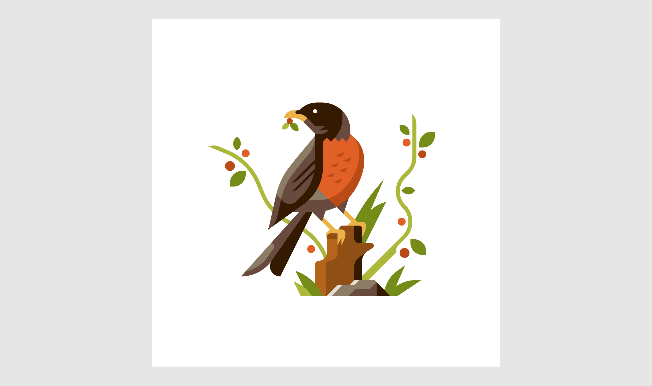 Robin illustration by Matt Anderson and Canopy Design and Illustration