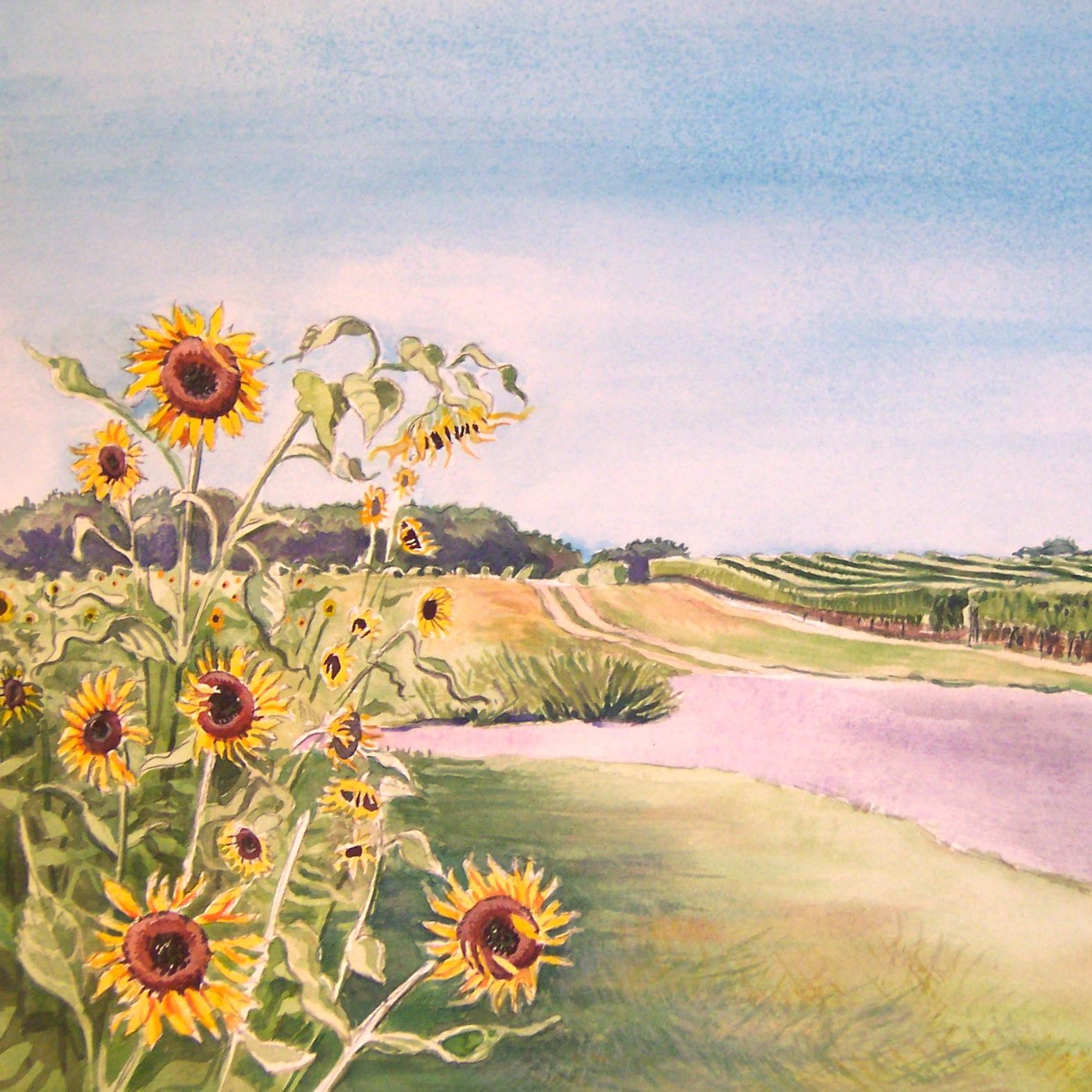 North Fork sunflowers.jpg