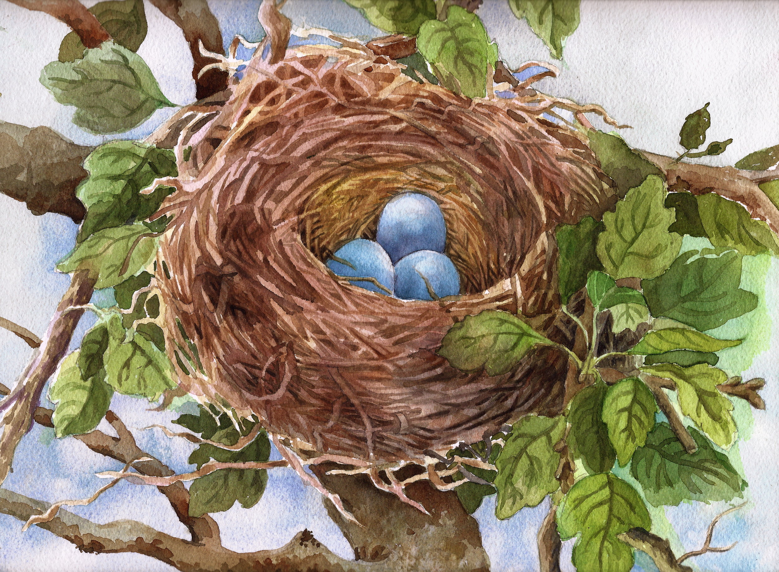 Robins nest scan-1.jpg