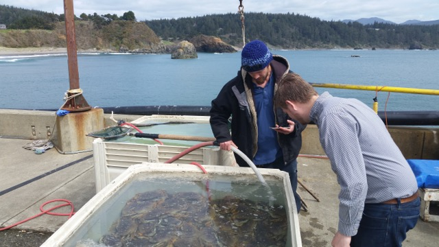 Dungeness crab is among southwestern Oregon's seafood riches. Landing more of the market value is how the Southwestern Oregon Food Systems Collaborative aims to shift the local industry outlook.   CREDIT: Courtesy NeighborWorks Umpqua