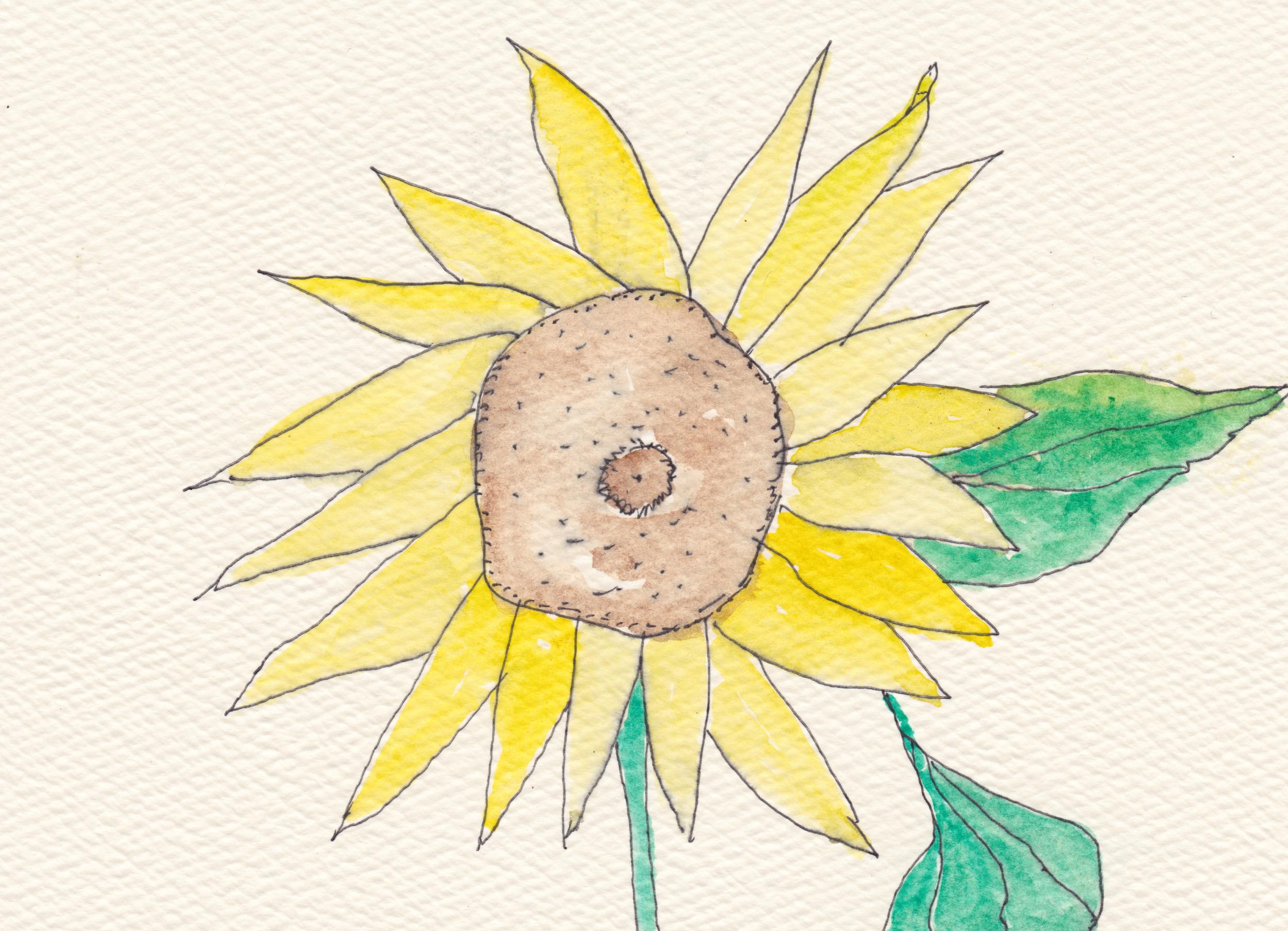 Sunflower for Julie 8.24.12 copy.jpg