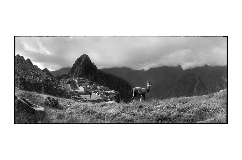 Macchu_Picchu_Llama_2.jpg