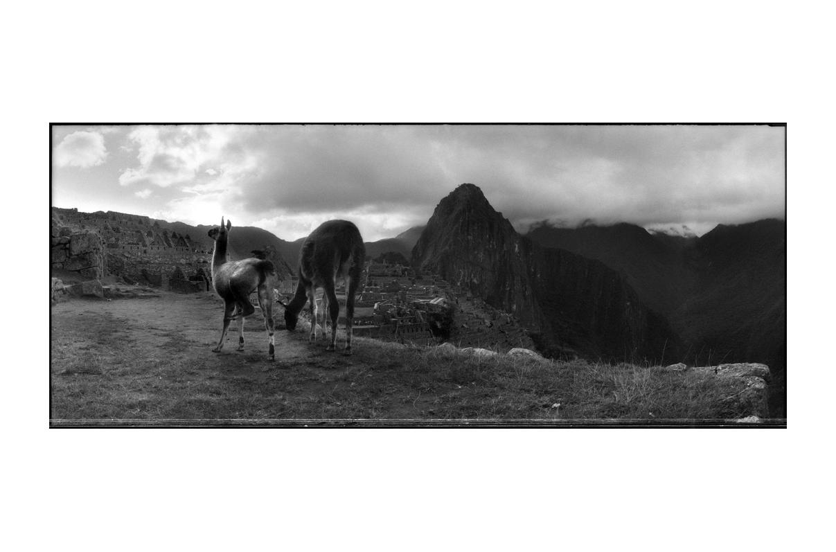 Machu_Pichu_Llamas.jpg