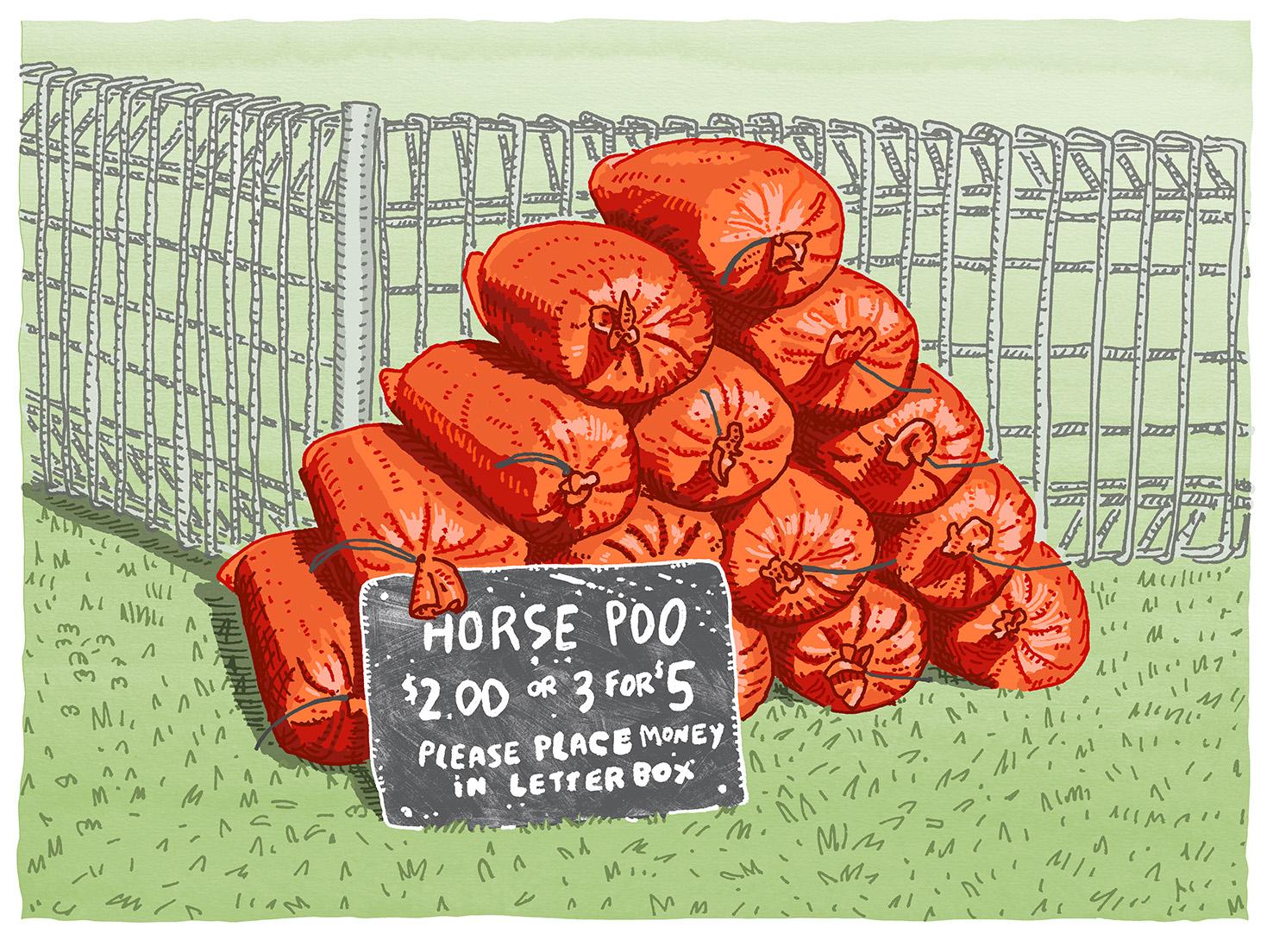 Horse poo!.jpg