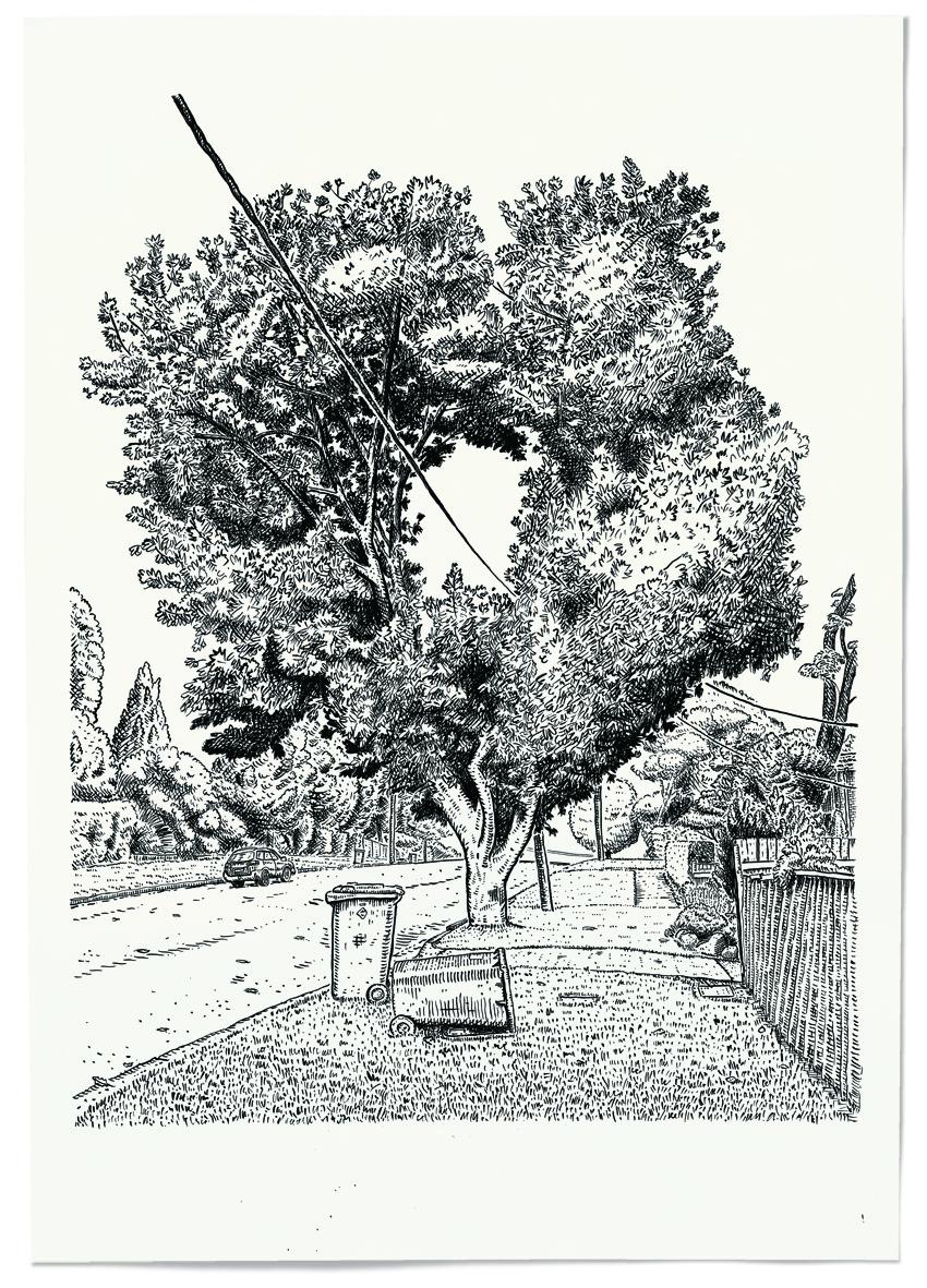 Tree Hole.jpg