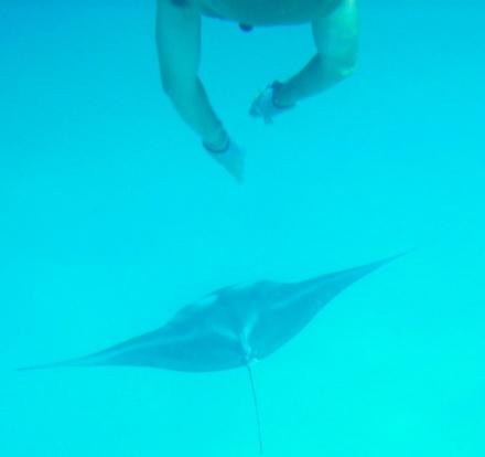 Baine with 7-foot manta ray copy.jpg