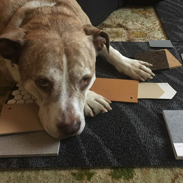 Now here is a new spin on #designerdog 😂 . . . . #2yokedesign #interiordesign #colorpalette #materialpalette #sustainablematerials #healthyinteriors #inspiredbynature