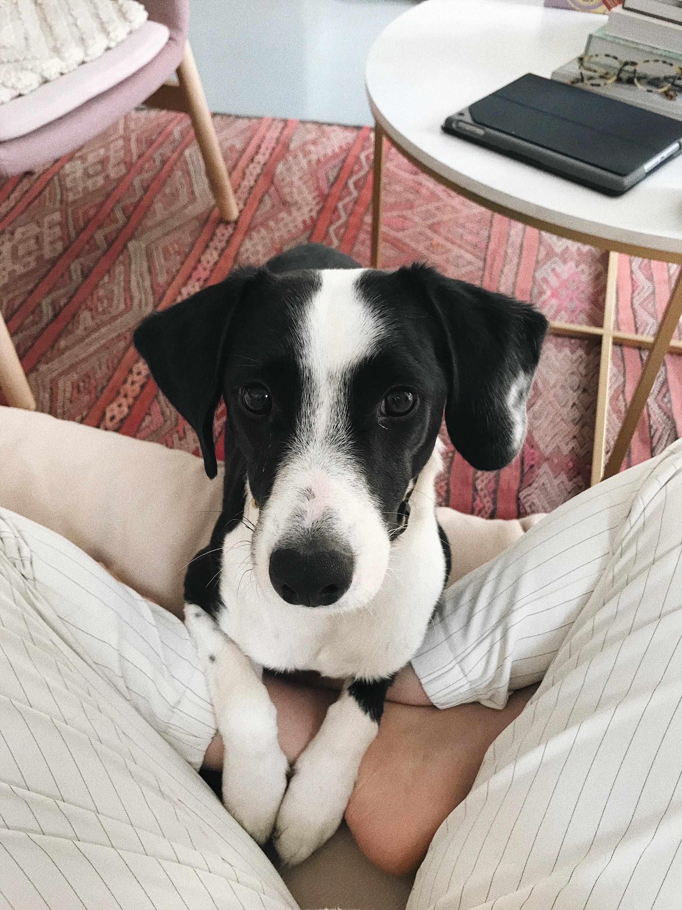 My Dog is Vegan | Joy Felicity Jane