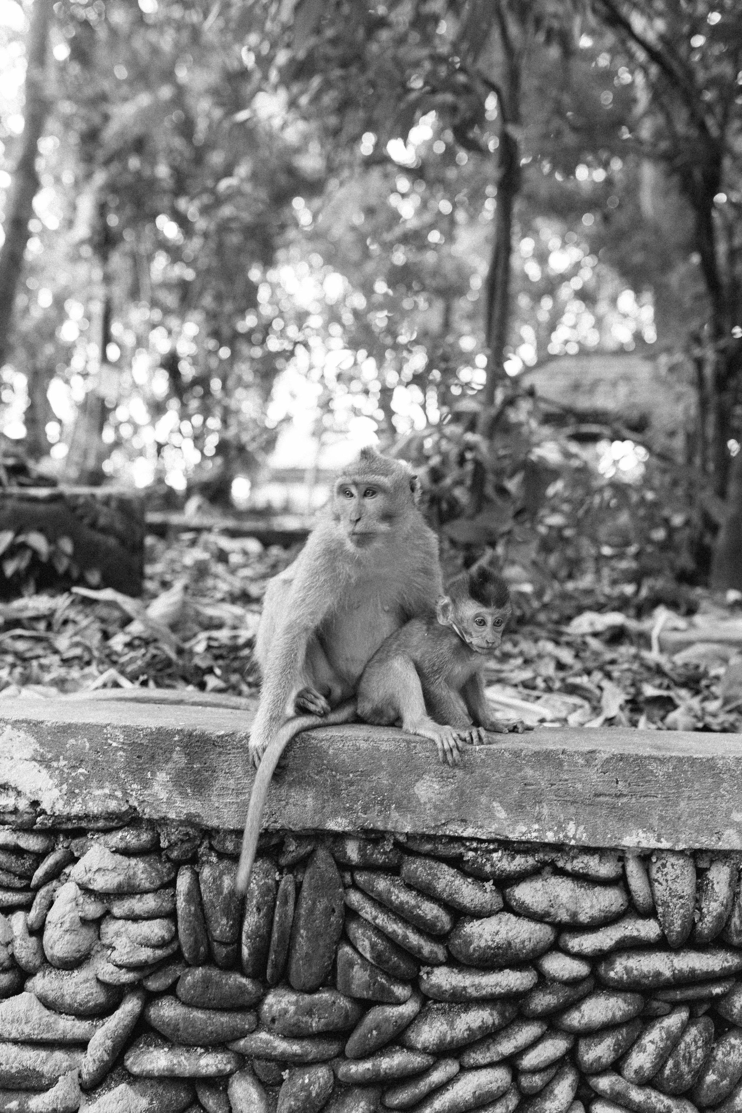 Bali | Joy Felicity Jane