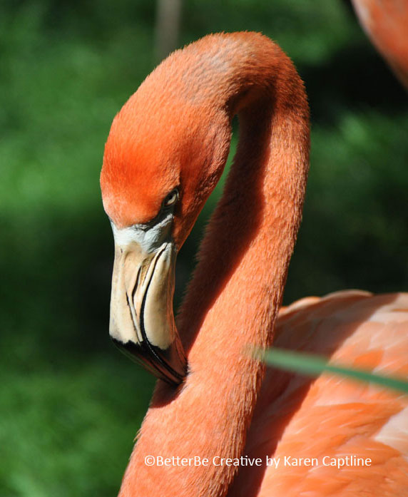 MISC-PHOTO----FLAMINGO.jpg