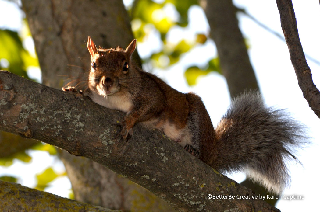 WILDLIFE--SQUIRREL-2.jpg