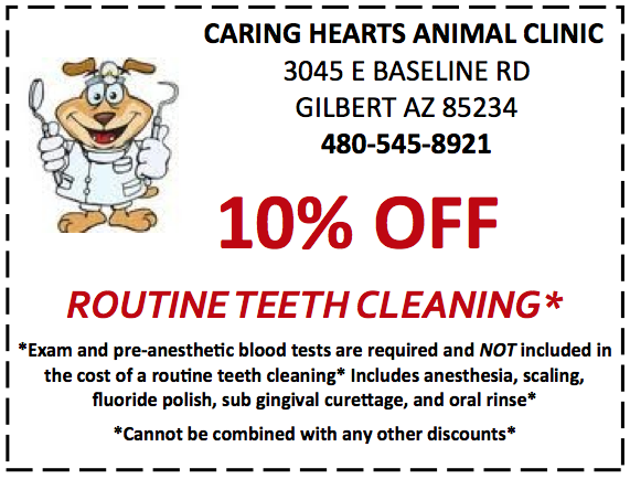 Dental Coupon.jpg