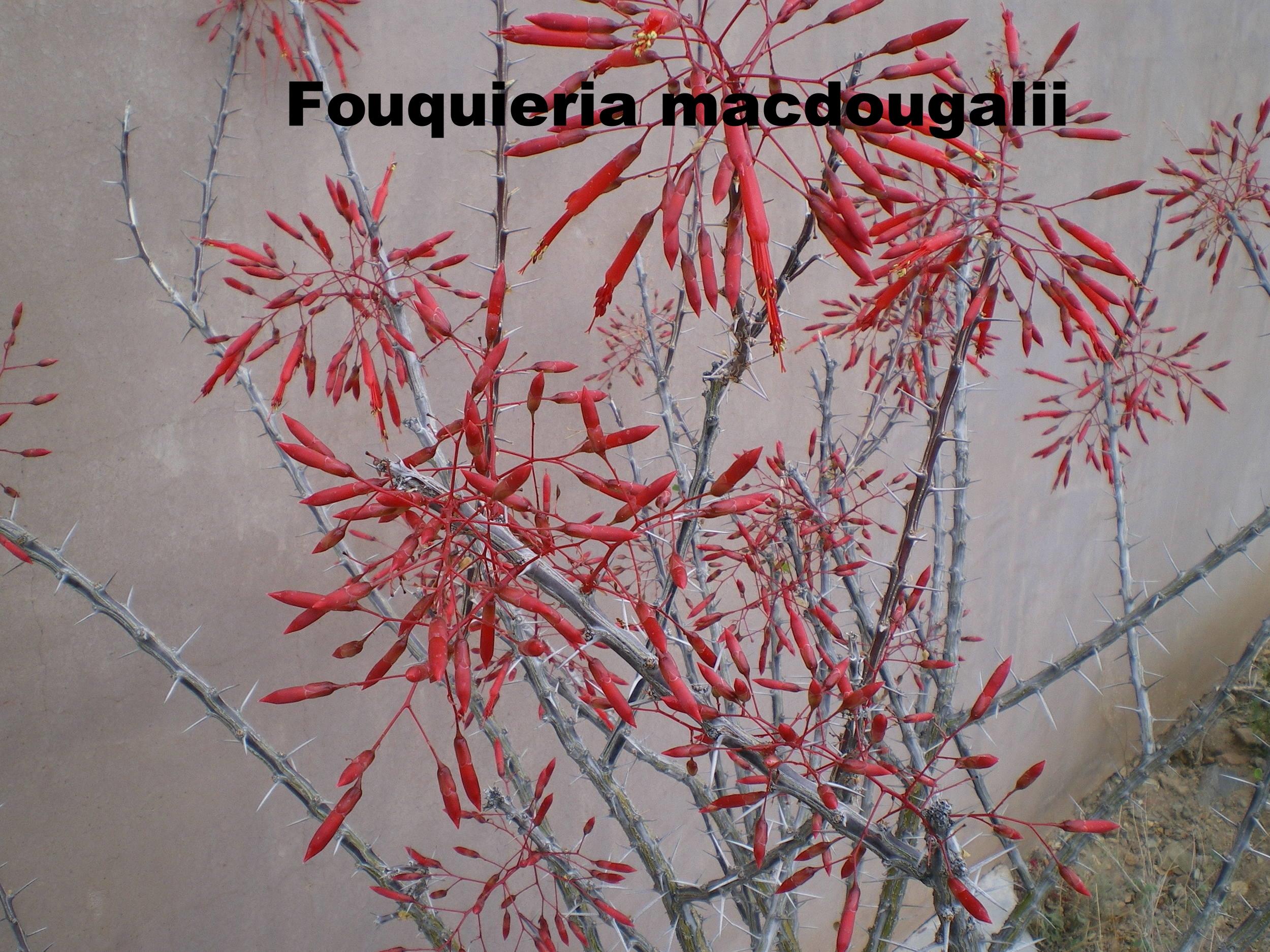 foumac flower.JPG