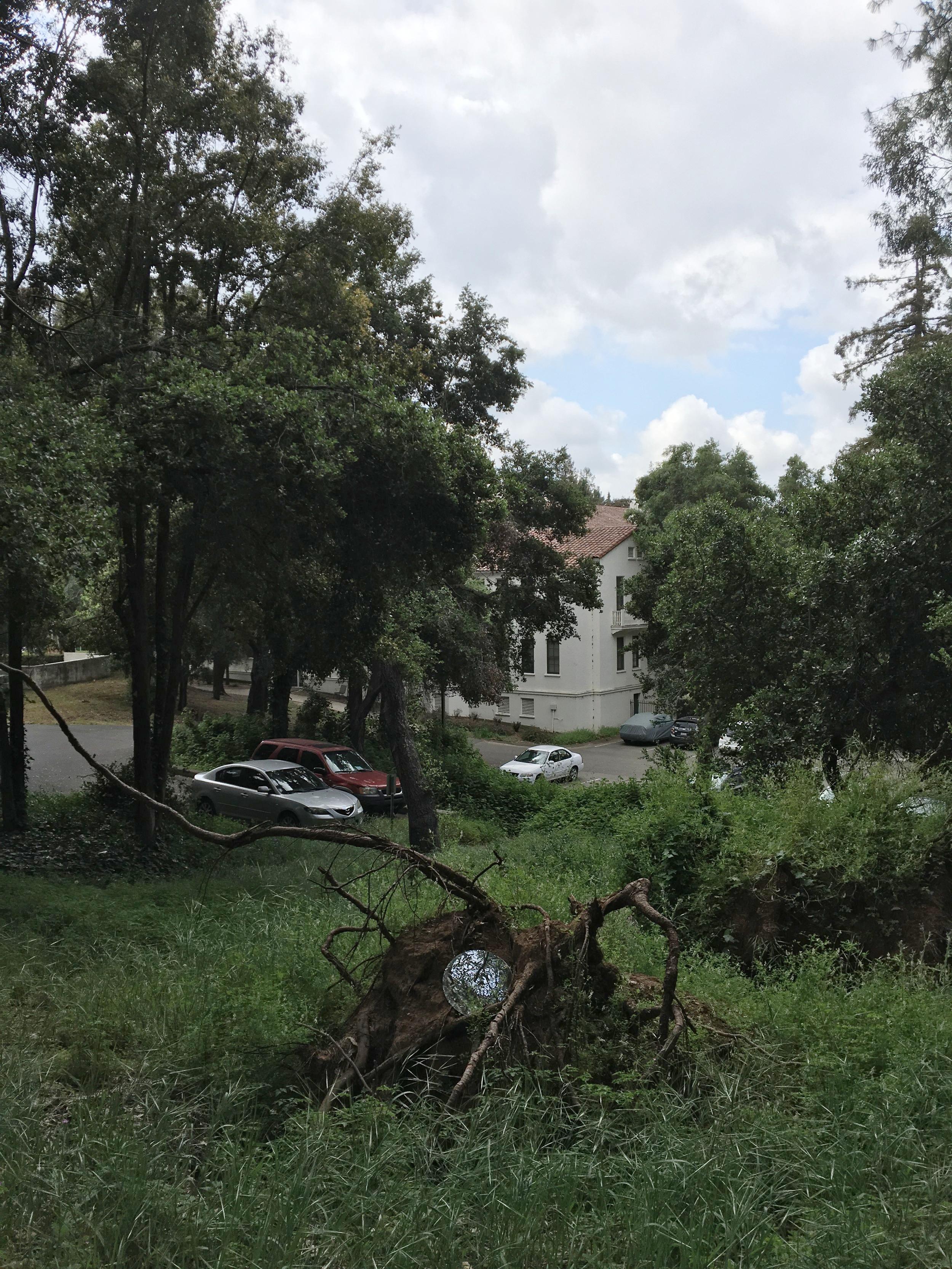 Site: Tree