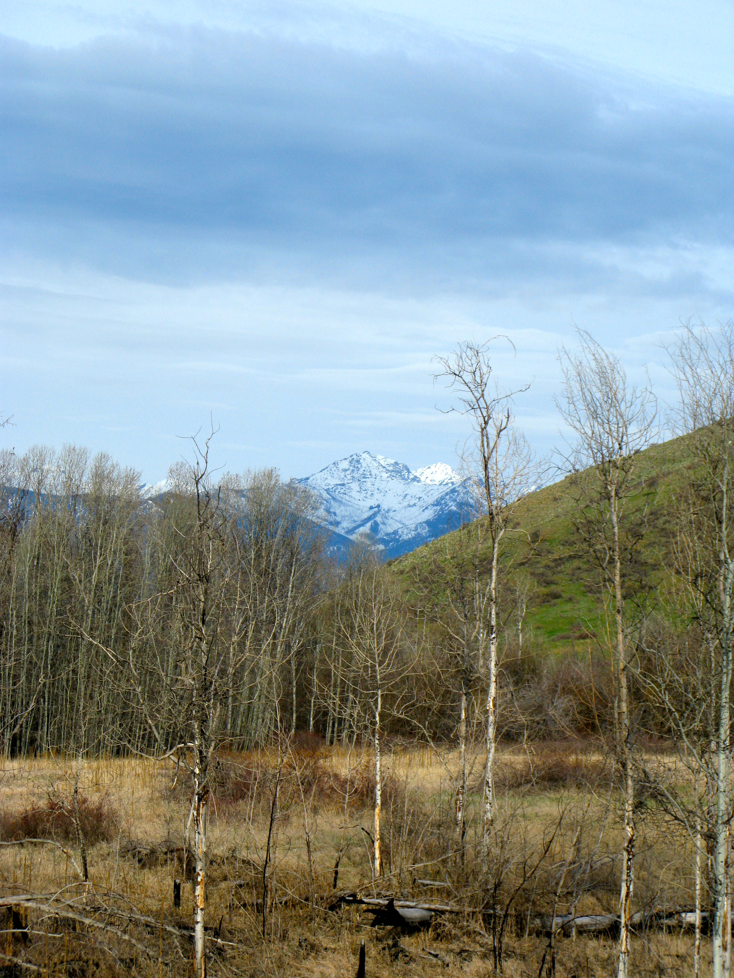 The hills are greening up! Mt. Gardner in the background. Photo courtesy of Pat Leigh.