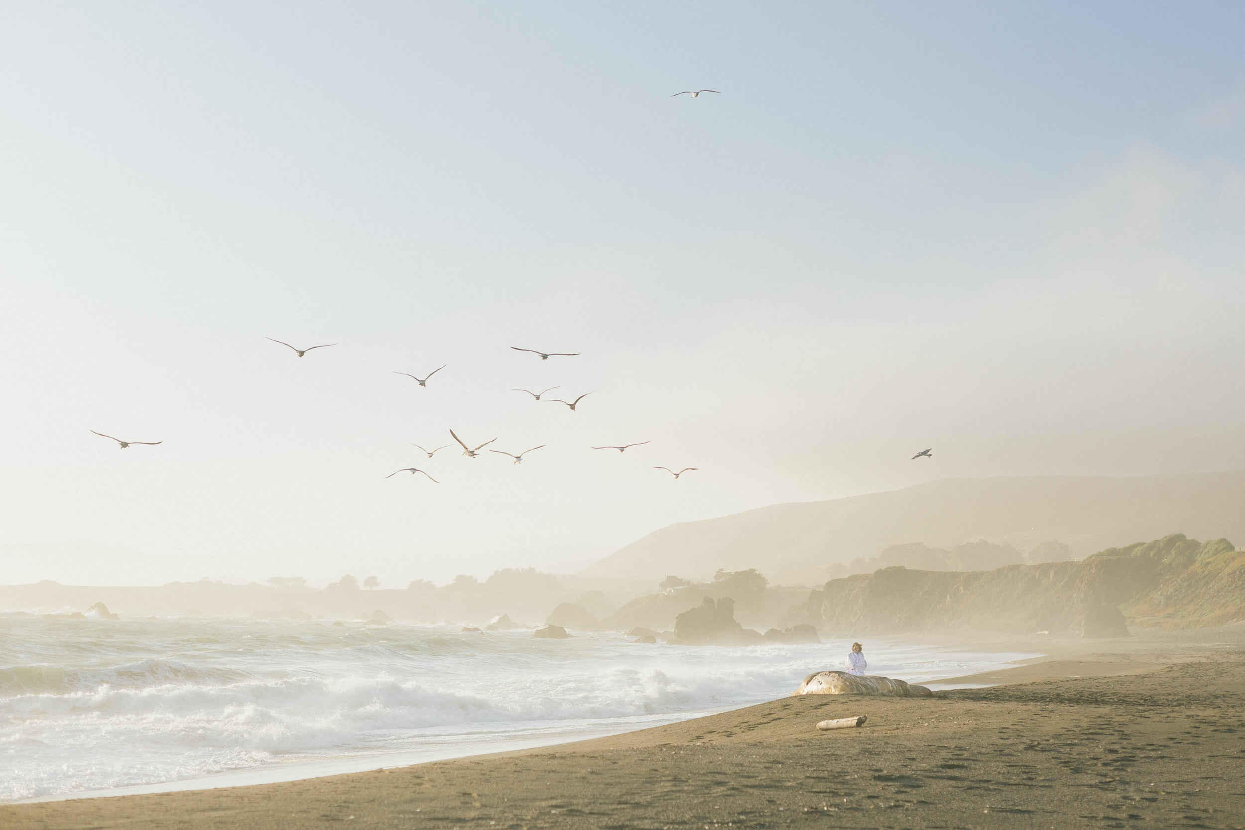 Birds-flying-portuguese-beach
