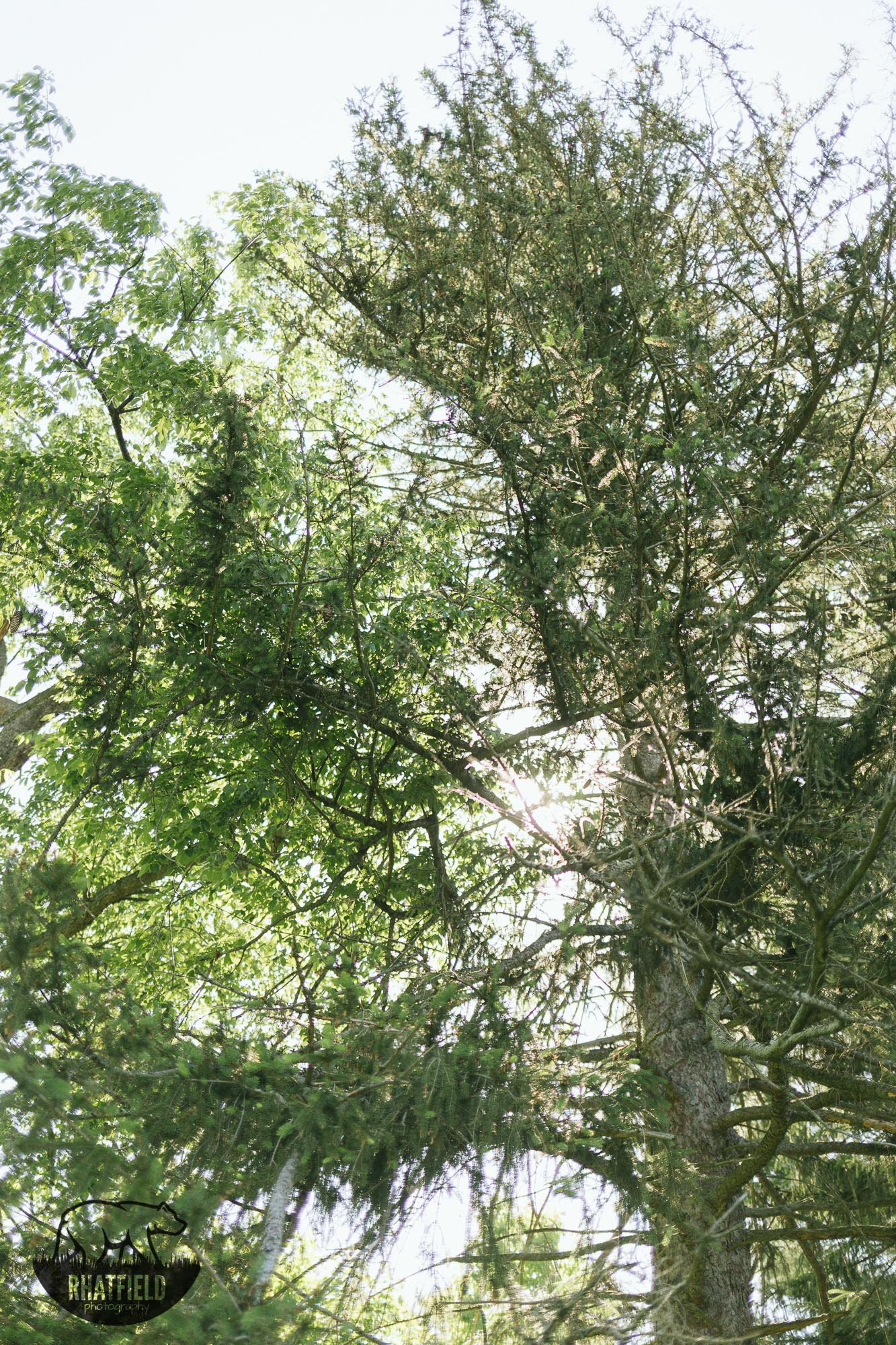 camp-tree-jameson-indianapolis
