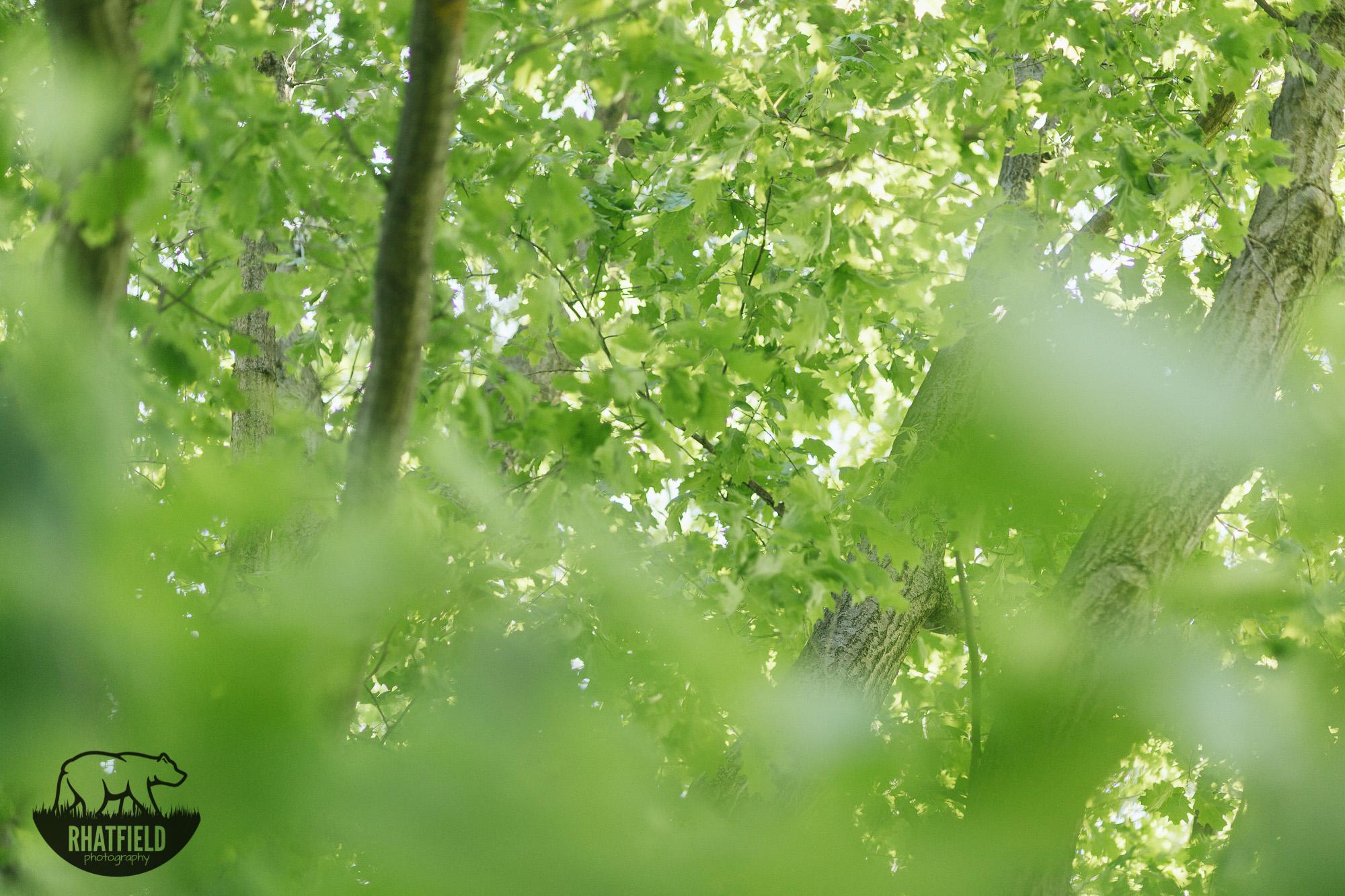 trees-jameson-camp-indianapolis