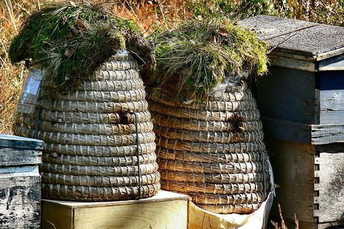 bees-hives.jpg