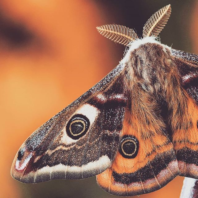 Are you a moth or a butterfly? We're moth people. #moth #butterfly #skincare #balance