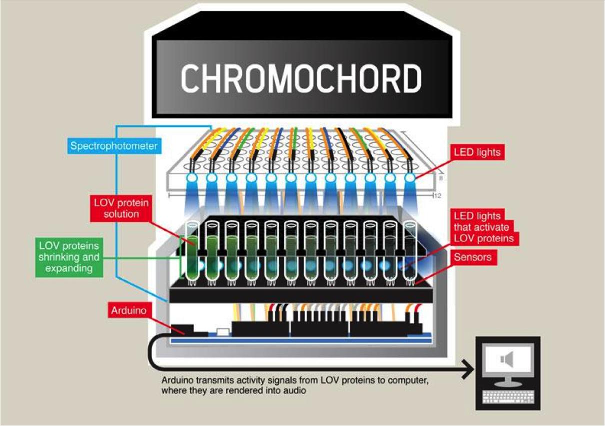The Chromochord Illustration.png
