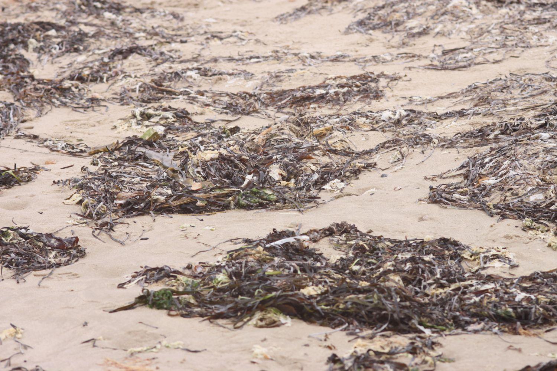 seaweed 4.jpg