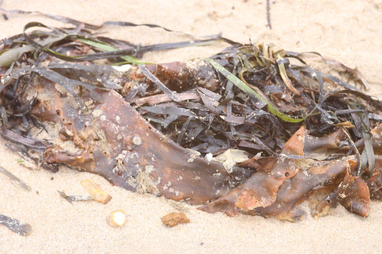 seaweed 5.jpg