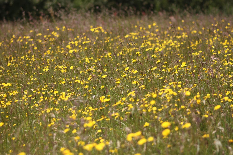 bosloe hay meadows 5.jpg