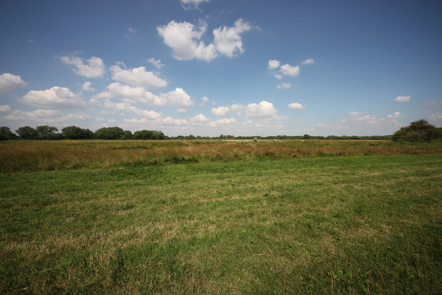 north meadow in summer