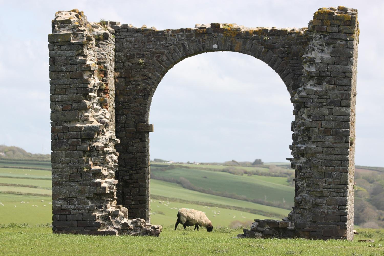 sheep between arch